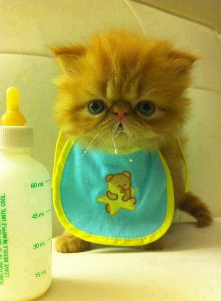 komik-kedi