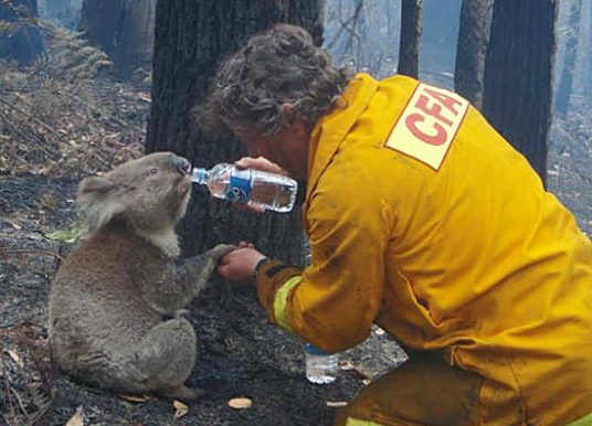 Avustralya Orman Yangını – Hayvan Sevgisi Örneği