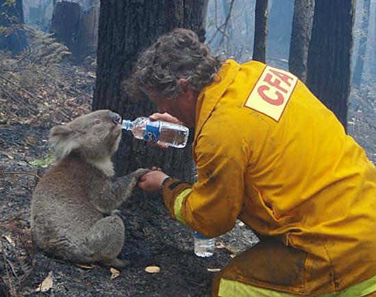 Avustralya Orman Yangını