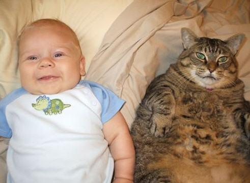 Şişman kedi ve bebek