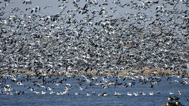 göçmen kuşlar