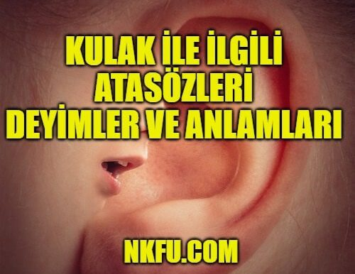 Kulak İle İlgili Atasözleri ve Deyimlerin Anlamları (İçinde Kulak Geçenler)
