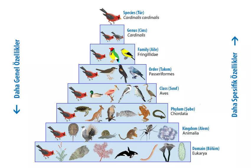 Taksonomi