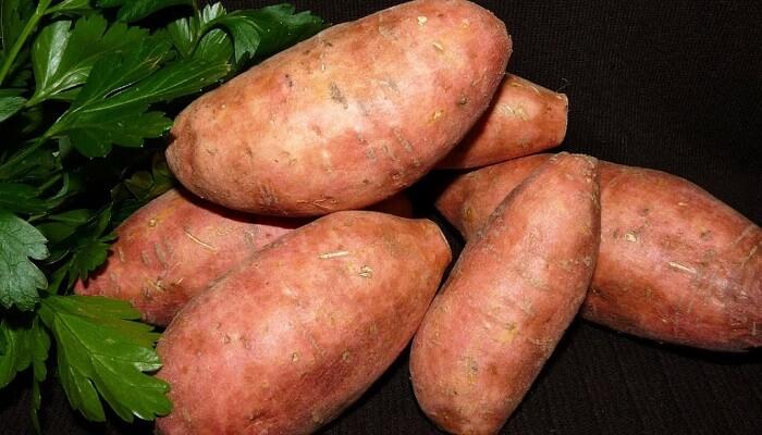 Tatlı Patates