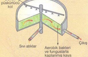 Bakterilerle Su Arıtımı