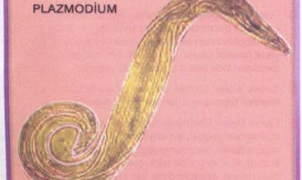 Plazmodium