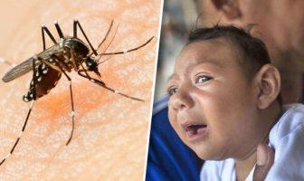 Zika Virüsü ve Hastalığı