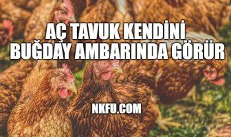 Aç Tavuk Kendini Buğday Ambarında Görürmüş