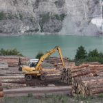 avrupa ormancılık