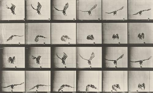 Eadweard J. Muybridge Fotoğrafları