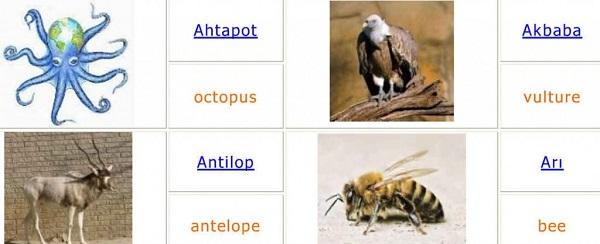 Hayvanların ingilizce isimleri ve resimleri ingilizce hayvan