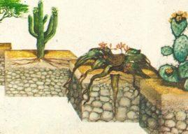 Bitki ve Hayvanlar Çöllerde Nasıl Yaşar? Nasıl Uyum Sağlarlar?