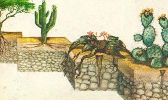 Çöl Bitkileri