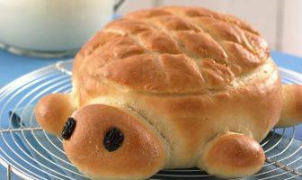 kaplumbağa ekmek