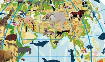 Oryantel Bölge (Zoocoğrafya)
