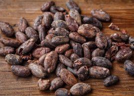 Kakao Nasıl Elde Edilir? Özellikleri, Kullanımı, Yararları Ağacının Yetiştirilmesi