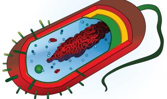 Tek Hücreli Canlıların Özellikleri