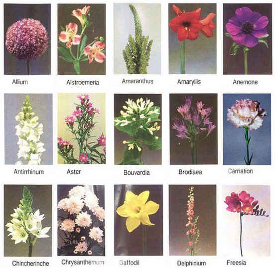 Цветы с названиями цветов на русском 72