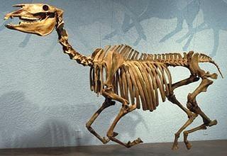 Dördüncü Zamana ait bir fosil