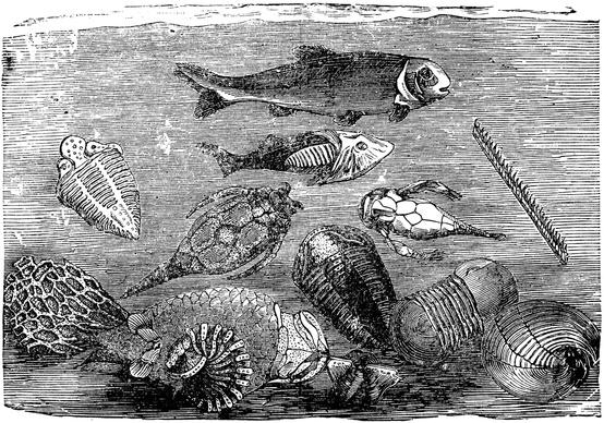 Paleozoik Döneme Ait Hayvan Örnekleri