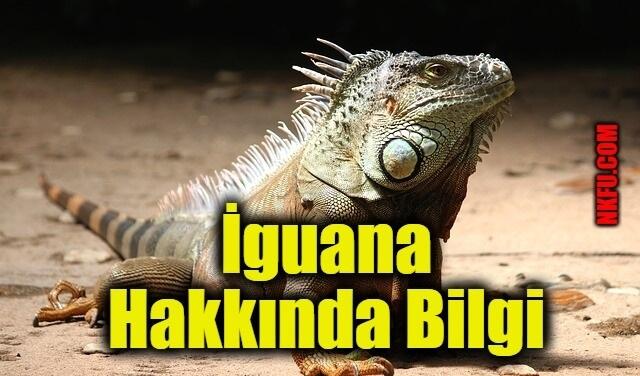 İguananın Özellikleri