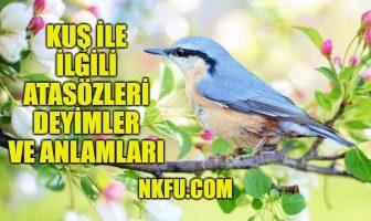 Kuş İle İlgili Atasözleri Deyimler ve Anlamları