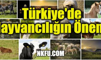 Türkiye'de Hayvancılığın Önemi