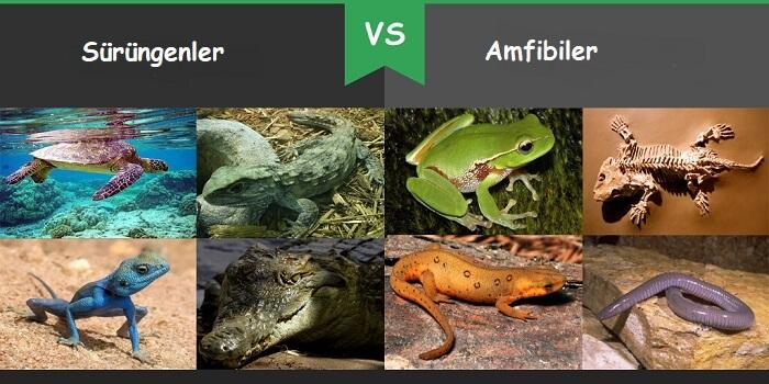Sürüngenler vs Amfibiler