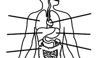 insan vücudu boyama