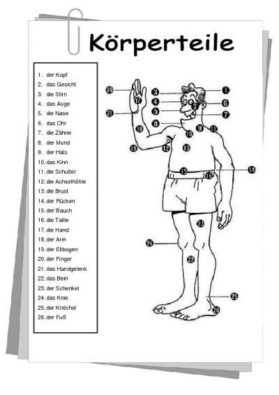 18 besten Sachunterricht  Mein Körper Bilder auf