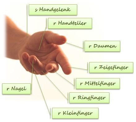 Resimli Almanca Vücudumuzun Bölümleri