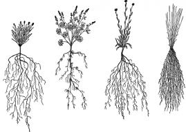 Bitkilerin Yapısal Özellikleri Nelerdir? (Kök, Gövde, Yapraklar ve Görevleri)
