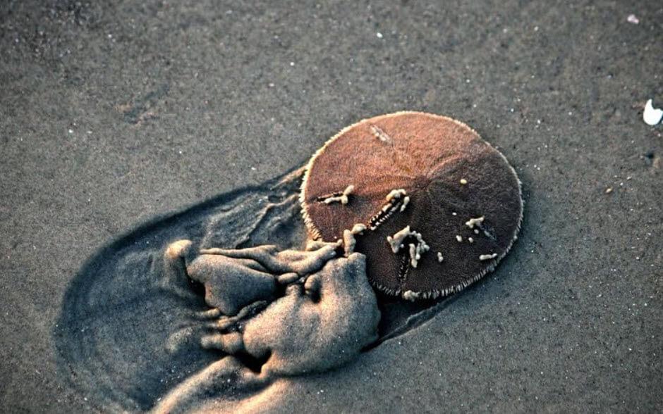 Kum Doları