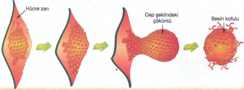Endositoz
