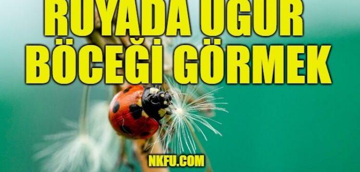 Rüyada Uğur Böceği Görmek Ne Anlama Gelir? Uç Uç Böceği Yakalamak