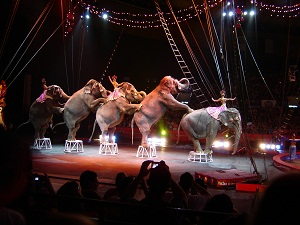 three ring circus stage