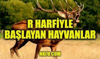 R Harfiyle Başlayan Hayvanlar
