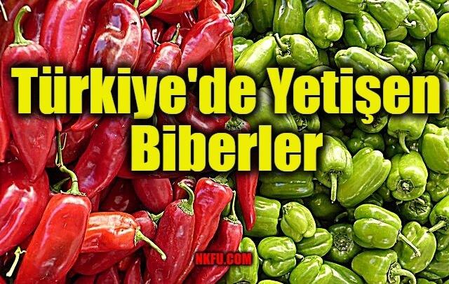 Türkiye'de Yetiştirilen Biberler