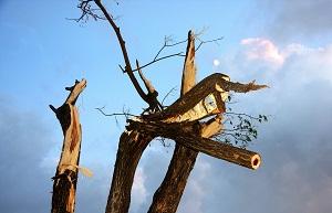 Fırtına sonrası kırılmış bir ağaç