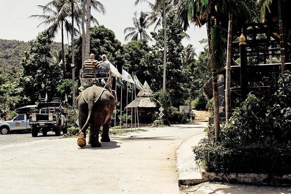 Koh Samui Adası - Tayland