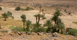 Büyük Sahra çölünde bir vaha