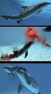 balina-dogum-ani