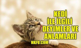 Kedi İle İlgili Deyimler