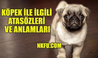 Köpek İle İlgili Atasözleri ve Anlamları