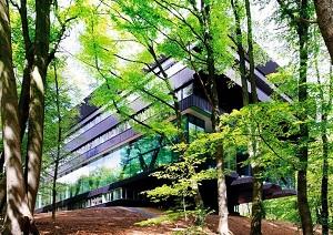 Yurt dışında orman içinde sakin bir rehabilitasyon merkezi