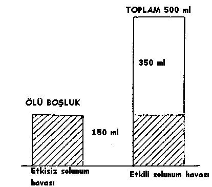 suni-solunum-hava-miktari