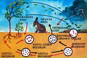 Azotun meydana gelmesini sağlayan bazı zincirleme olaylar