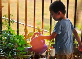 Yazın Bahçe Bakımı Nasıl Yapılır? Haziran ve Temmuz Ayında Bahçe Bakımı