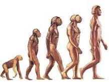 insan-evrimi