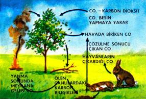 Karbonun meydana gelmesini sağlayan bazı devreler.